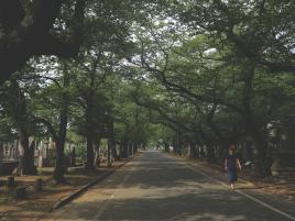 IMG_Tokyo_trees
